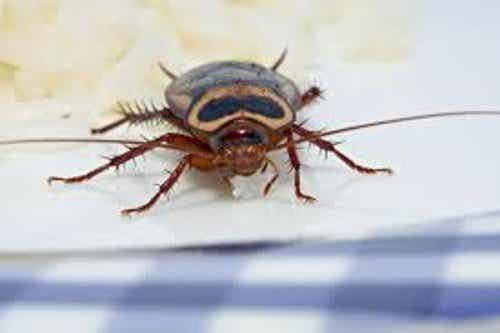 Was tun gegen Insekten in der Wohnung?