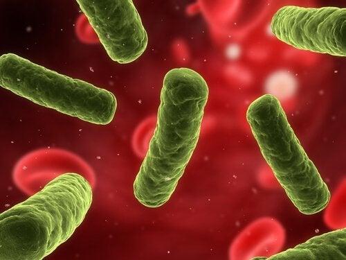 autoimmunkrankheiten-immunsystem-staerken