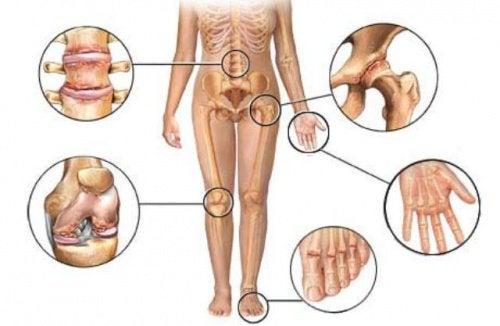 Knochenverbindungen