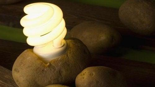 Licht aus der Kartoffelbatterie