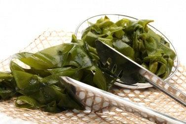 algen-fuer-schilddruese