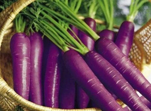 violette-moehren-im-korb