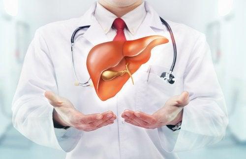 Arzt erklärt Funktion der Leber