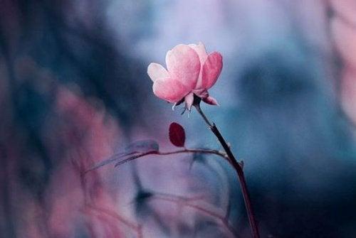 Rosa Blüte liebe