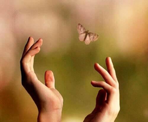 Hände versuchen Schmetterling zu fangen Angelegenheiten