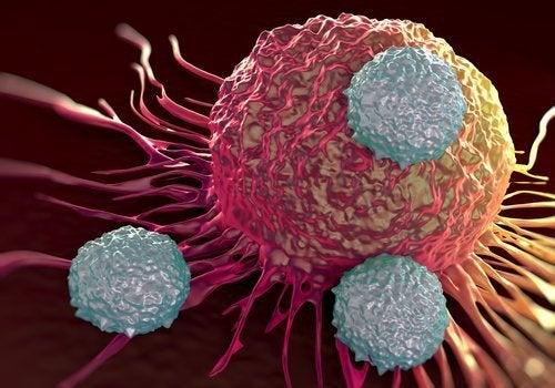 Krebszelle
