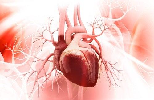 7 Empfehlungen für ein gesundes Herz