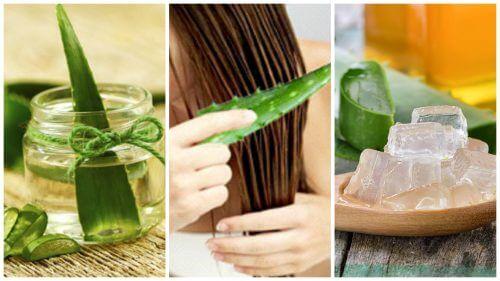 5 Anwendungen mit Aloe Vera für kräftiges Haar