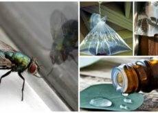 Fliegen mit Hausmitteln bekämpfen