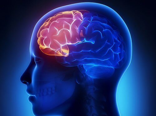 Gehirn bei einer Hormonstörung