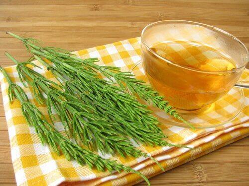 Tee aus Schachtelhalm gegen Harnwegsinfektion