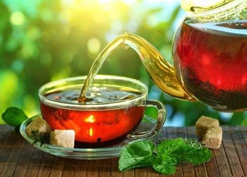Tee gegen Osteoporose