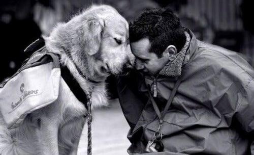 Therapie mit Hunden gegen Wehmut und Traurigkeit
