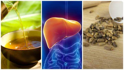 Mit diesen 6 alternativen Anwendungen effektiv die Fettleber bekämpfen