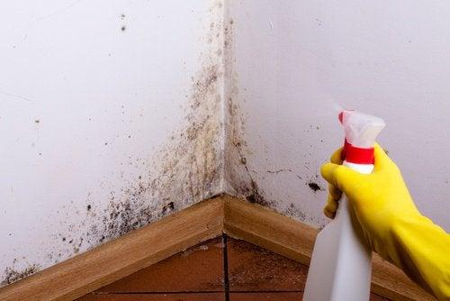 Feuchte Stellen mit Salz eliminieren