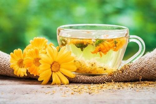 Ringelblume gegen Gerstenkorn