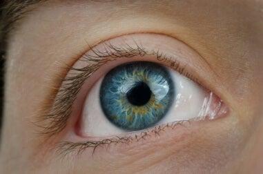 Blaubeeren für gesunde Augen
