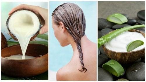 Aloe vera und Kokosmilch pflegt dein Haar