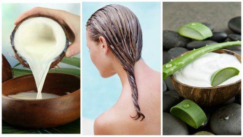 Bekämpfe Haarausfall mit dieser Anwendung mit Aloe vera und Kokosmilch