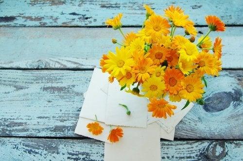 Naturheilpflanze Ringelblume