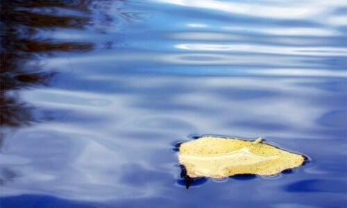 treibendes Blatt im Wasser als Symbol für Frauen, die sich aufopfern und sich einsam fühlen