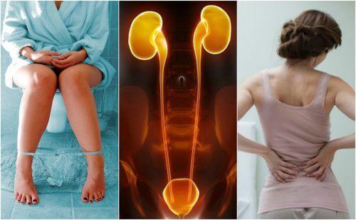 7 Zeichen einer Erkrankung der Nieren