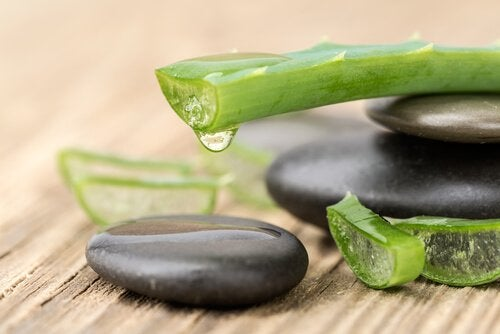 Aloe vera für Cremes