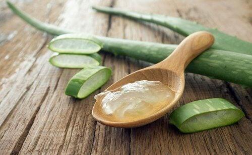 Aloe vera zur Behandlung von Keloiden