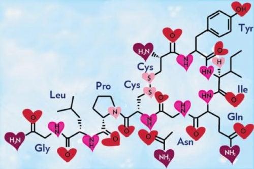 Chemie der Liebe: Oxytocin