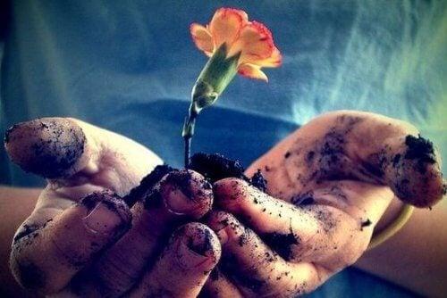 Hände mit Erde und einer Blume symbolisieren Liebe und Geduld zur Bewältigung von Emotionen