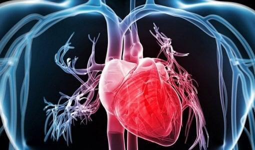 Stärke dein Herz