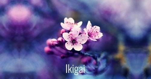 japanische Wörter Ikigai