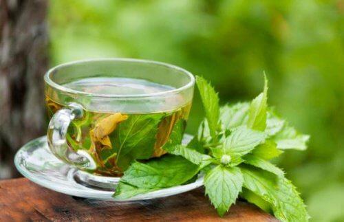 Tee gegen Fettleber