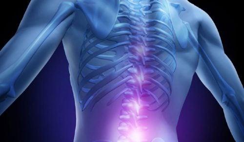 Die menschliche Wirbelsäule enthält das Rückenmark.