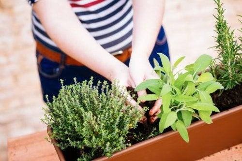 Pflanzen - Ideen für einen schönen Minigarten
