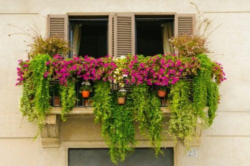 Fensterbank - Ideen für einen schönen Minigarten