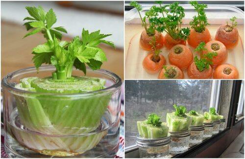 Gemüse nachwachsen lassen – So geht's