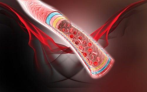 Die Innenansicht einer Arterie zeigt rote Blutkörperchen, deren Fluss durch die Eigenschaften von Kokoswasser verbessert wird.