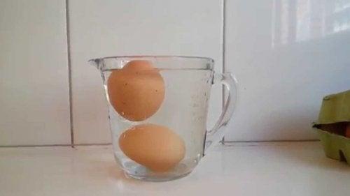Ist das Ei noch frisch? Eiertest im Wasserglas