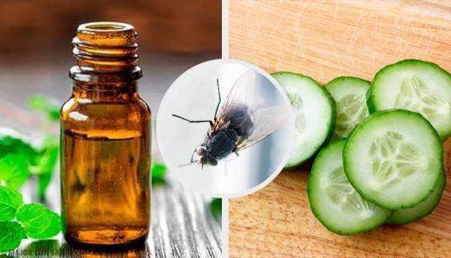 7 Naturmittel zur Abwehr von Fliegen