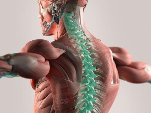 Mikrofasern zur Wiederherstellung des Rückenmarks