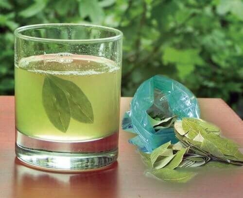 Hausmittel gegen Nierensteine Tee aus Avocadoblättern