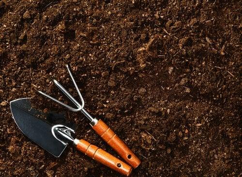 Heidelbeeren richtig pflanzen: den Boden vorbereiten