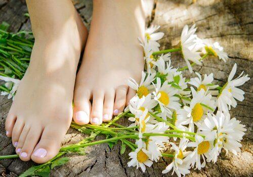 Medizinale Eigenschaften der Kamille: Mittel für sanfte Haut an den Füßen