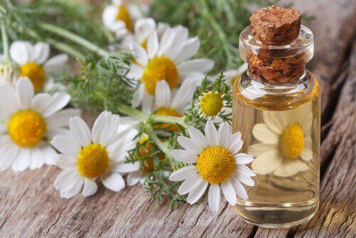 Medizinale Eigenschaften der Kamille und von Kamillenöl