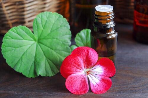 Geranienöl zur Behandlung von Cellulite