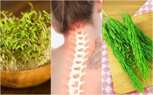 7 Heilpflanzen zur Erhaltung der Knochengesundheit