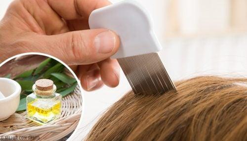 Kopfläuse beseitigen mit 6 Hausmitteln