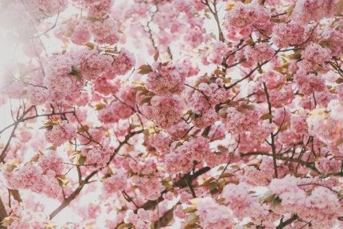 Saisonale allergische Rhinitis im Frühling