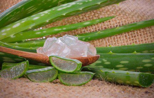 Aloe vera als Hausmittel gegen Krätze